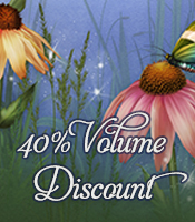 Forty Percent Off Banner