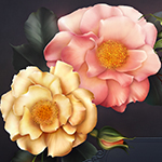 Midnight Garden Digitally Painted Roses