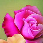 "Jaguarwoman's ""Rose Bouquet Background #1"""