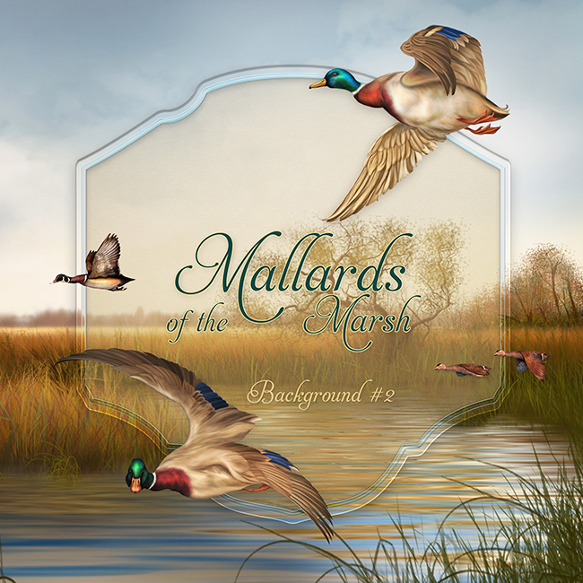 "Jaguarwoman's ""Mallards Background #6"""